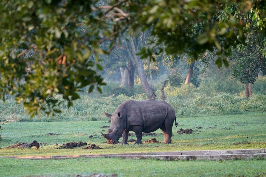 Les plus beaux safaris de l'Ouganda
